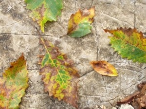 What to grow in autumn