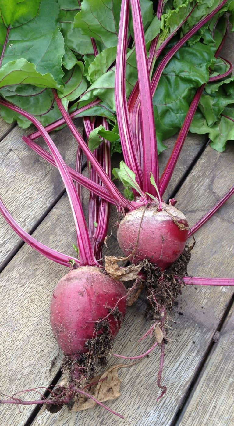 Growing Beetroot