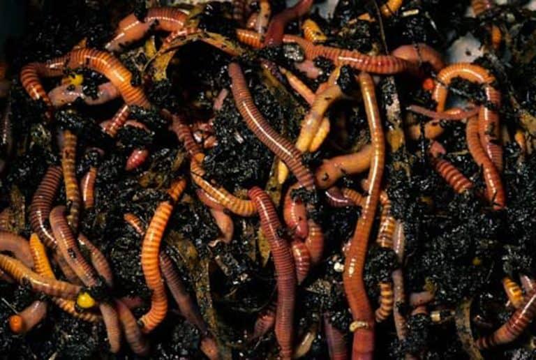 worm farm