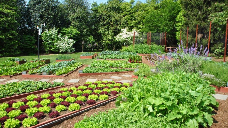 Edible Gardening – The Beginners Guide