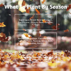 growingvegesseasons