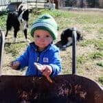 What To Put In A Compost Tumbler To Start