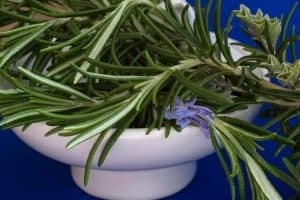rosemary Herbs To Grow In Fall