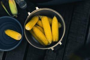 Corn A Gateway To Nutritious Life