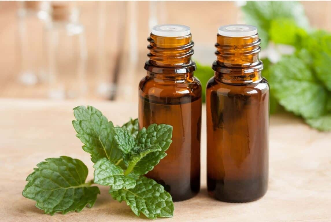 Does Peppermint Oil Repel Roaches 1