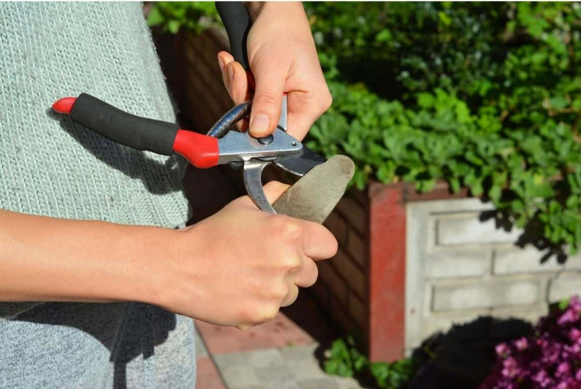 How to Sharpen Garden Shears 1