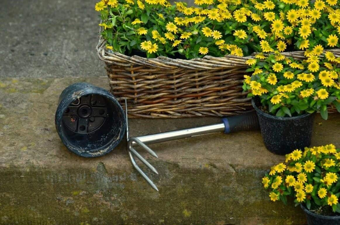 Remove The Weeds By Hand
