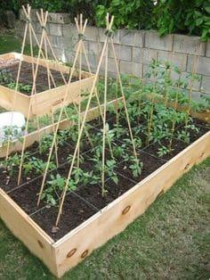 Plant a Square Foot Tomato Garden
