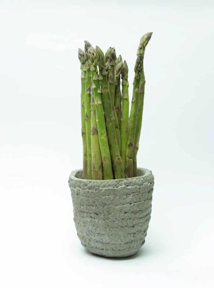 Grow Asparagus in container